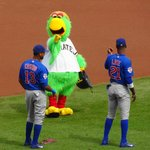 Pirate Parrot making a point to Chicago Cubs players.