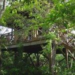 Hamanasi Treehouse!