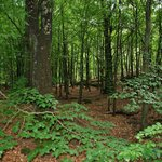Den lumna skogen i slottskogen