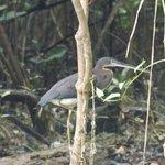 aves en su hábitat natural