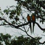aves en su habitat natural