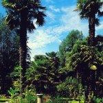Abbotsbury Sub-Tropical Gardens - an easy walk away