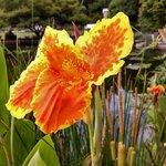 Flower's in the garden