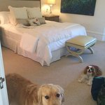 Our beautifully made bed and our pups.