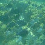 Maravillosos peces decolores
