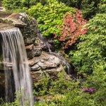 Waterfall in Japenese Garden