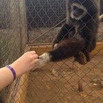 The gibbons are also very gentle and will hold your hand