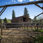 The barn and tack room