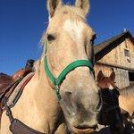 My horse CJ