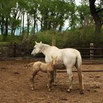 A foal born just days before I arrived