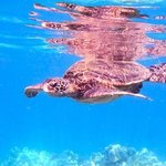Neat sea turtle experience!