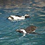 Playful Penguins.