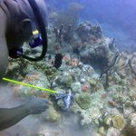 Kenny pulverizing Lionfish and feeding other fish-
