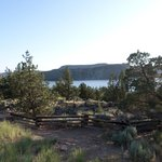 Juniper Trees and the Lake