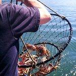 Crab ON!!!