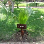 My Name and Tree awesome