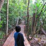 Half way to Jungle Trekking