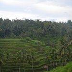 Tegalalang Rice Terrace (1)