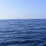 Albatross & Humpback