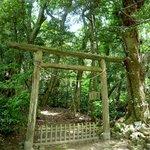 ご神体の「入らずの森」