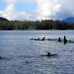 Snorkel Alaska
