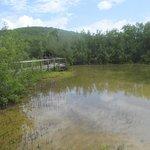 Paseo tablado entre mangles