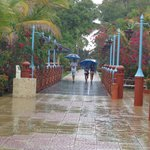 Yendo a desayunas bajo la lluvia!!geniales los paraguas!!