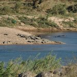 View from room of the river and into Kruger