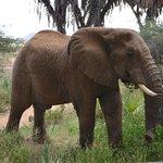 Elefante de visita por el Camp