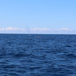 Fin Whale at a distance