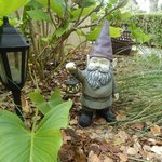 One of the Gnomes.