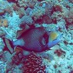 Dive site: Monkey Beach