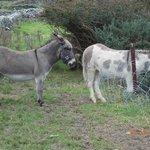 Resident donkeys at the restaurant :)