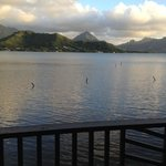 Early morning view of Kaneohe Bay from our deck