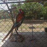 Papagei alleine in einem Gehege
