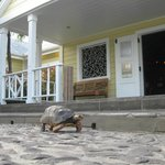 Turtle in front of lobby
