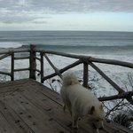 el perro y el mar