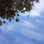 Debaixo das árvores em Lopes Mendes