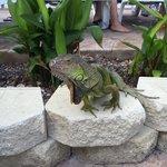 Loved the pool lizard