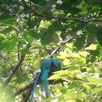 Quetzal through the telescope