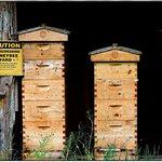 Bee aviary