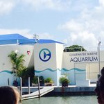 Clearwater marine aquarium!!!