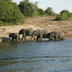 We had lunch with these elephants on our second day