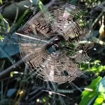 A Beutiful Spiderweb