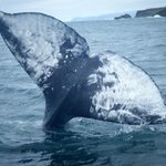 Delfin- och valskådning
