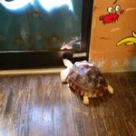 The turtle was trying to open the door