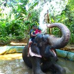 elephatant shower