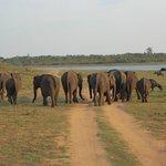 Elefant in park