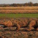 On aboat cruise, view crocodiles
