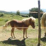 Cavallino della Tenuta di Corbara